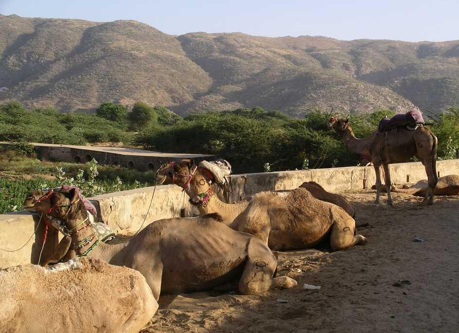 Biggest Fair in The us of The Biggest Camel Fair